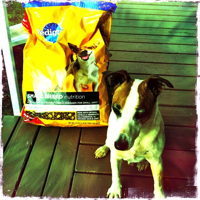 What does Food Security mean to you? - dog food