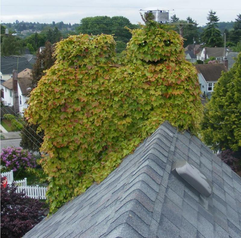 Why is Oscar the Grouch on my Roof?