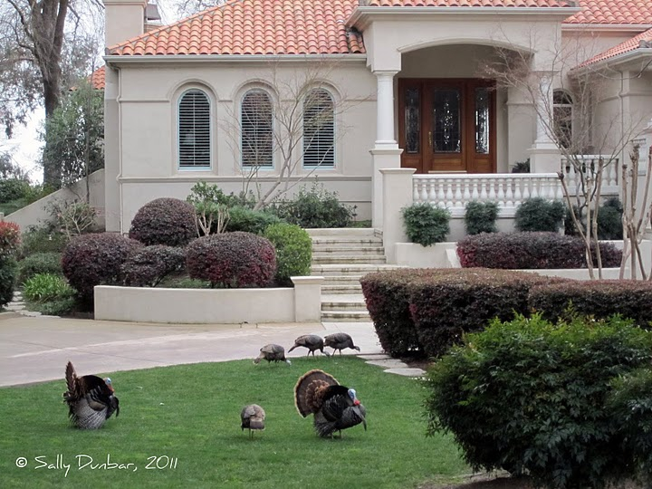 turkeys in front of a mansion