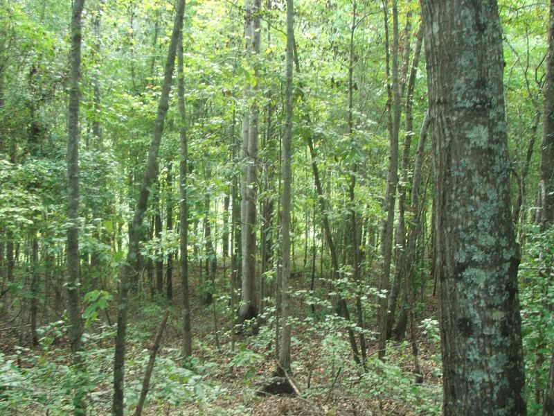 Land for Sale in Dallas County, Alabama