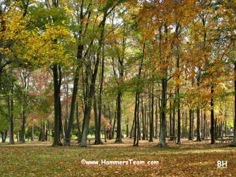 Pascack Valley Fall Leaves Photo