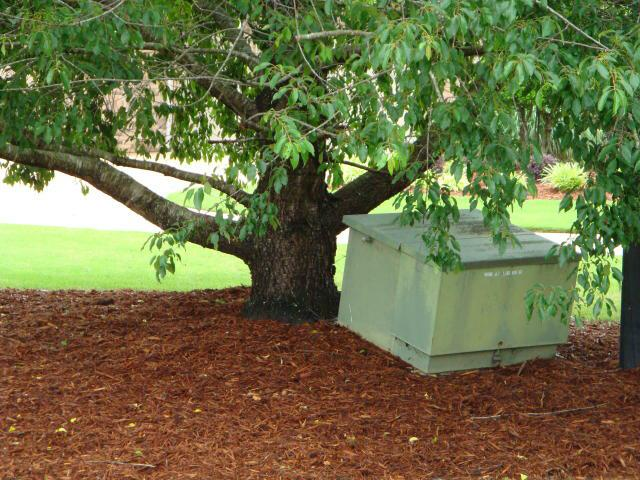 Tree vs utility box
