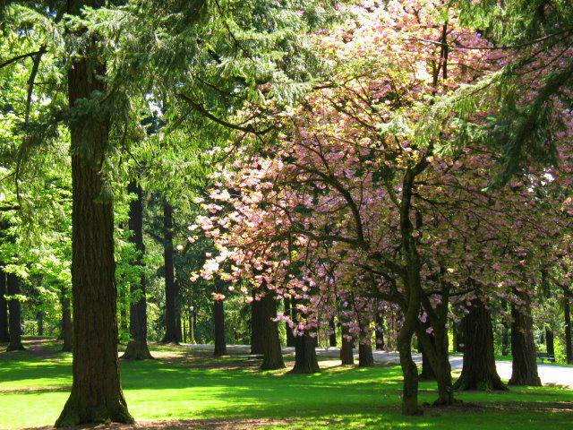 Mt Tabor Park In Portland Oregon