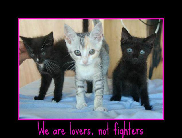 Pet Adoption Agency and becoming a Foster Parent Around ...