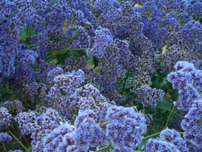 The Color Purple Spring Time In Carlsbad And Southern California