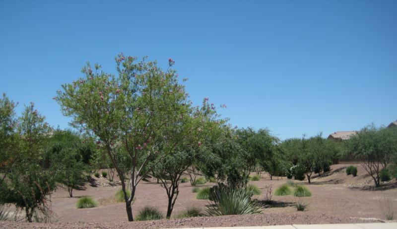 greenbelt and blue sky at Rancho Marana
