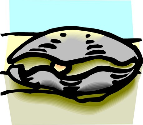 clipart of oyster with pearl