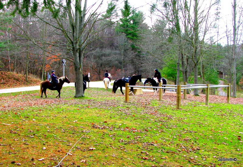 Horses at Trail Centre in the Dundas Valley Conservation Area