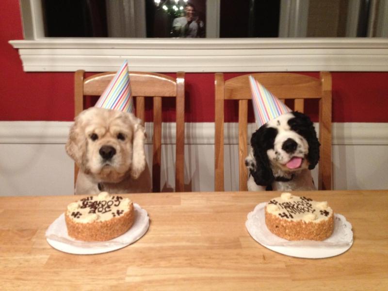 Special Treats From Louisville S Three Dog Bakery