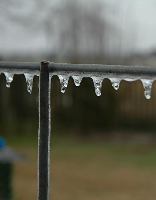 Ice on a fence, Maurice, LA, February 2011
