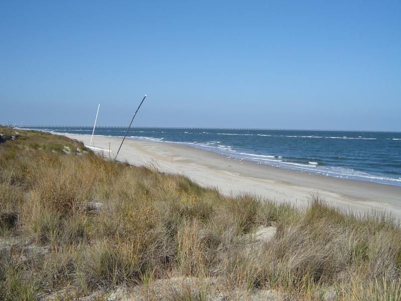 Chesapeake Bay Beach