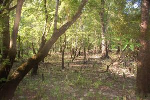Land For Sale In Polk County Texas