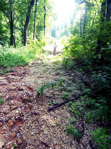 Trail Leading to Natl Forest Second/Vacation Homes Asheville- CRESTON
