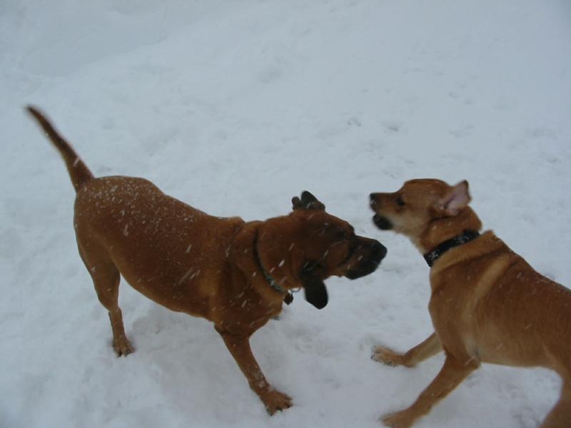 Rocky and Mason Play in the Snow