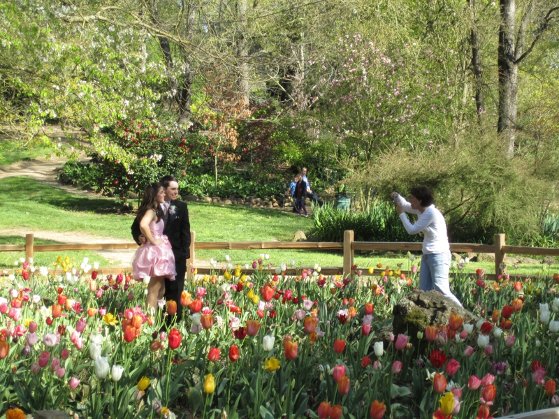 Wedding Photos At The Jensen Botanical Garden In Carmichael