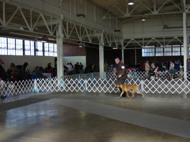 Reba going around the ring by Lucky Lang