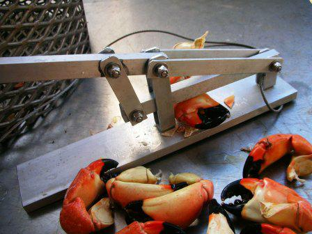 Stone crab in st pete