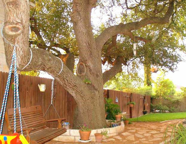lot with trees in round rock texas