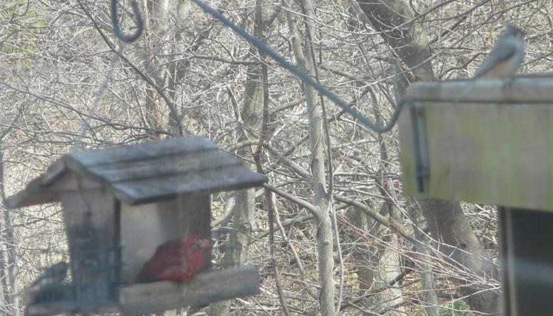 Bixler Church Birdies -HomeRome 410-530-2400