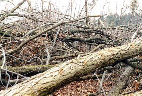 Broken Brush pile from storm damage in Howell NJ