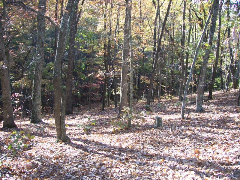 NC Mountain Land For Sale - Taylorsville NC - Barrett Mountain Acreage