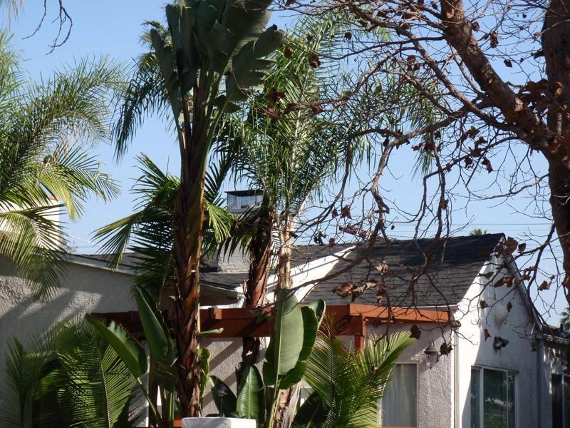 Relocation Specialist in Malibu, CA Endre Barath,JR