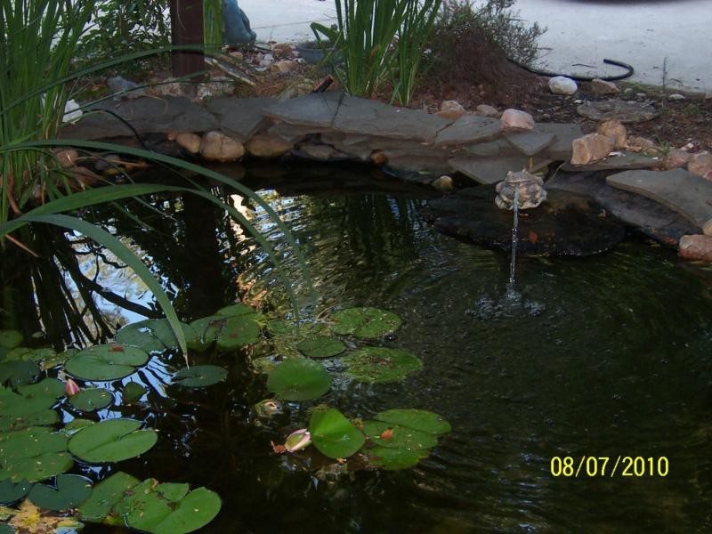Koi ponds the perfect addition to any landscape for Perfect koi