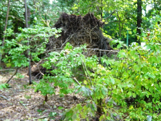 Solomons, MD-Hurricane Irene-downed trees