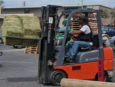 maui hay is not cheap