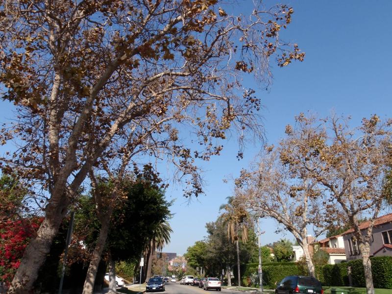 relocation specialist Endre Barath,Jr. Realtor in Los Angeles