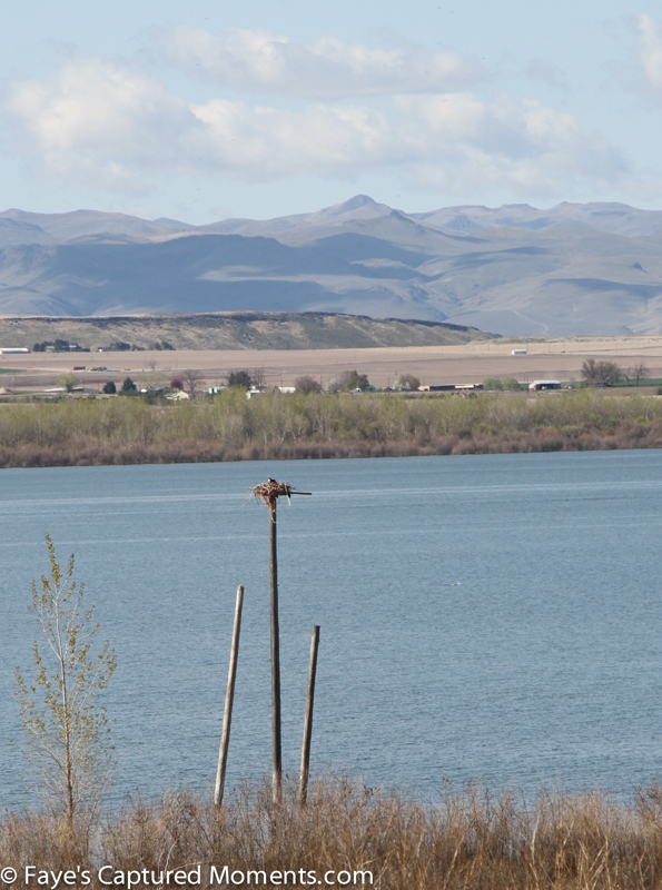 Lake lowell nampa and caldwell idaho is under attack for Lake lowell fishing