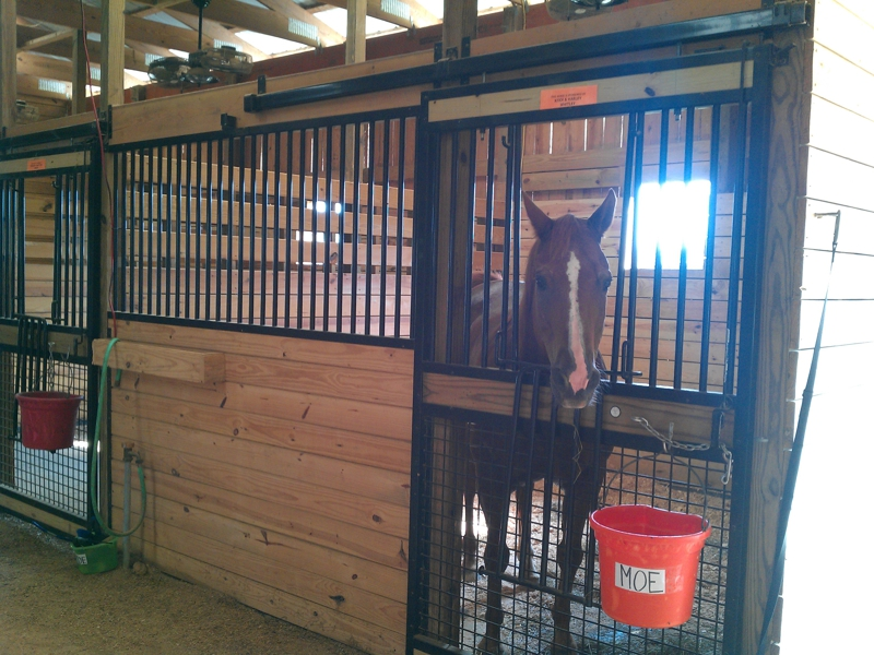 Reins from Above Therapeutic riding