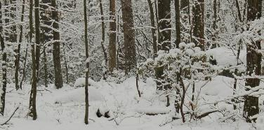 Fairfield CT snowy woods
