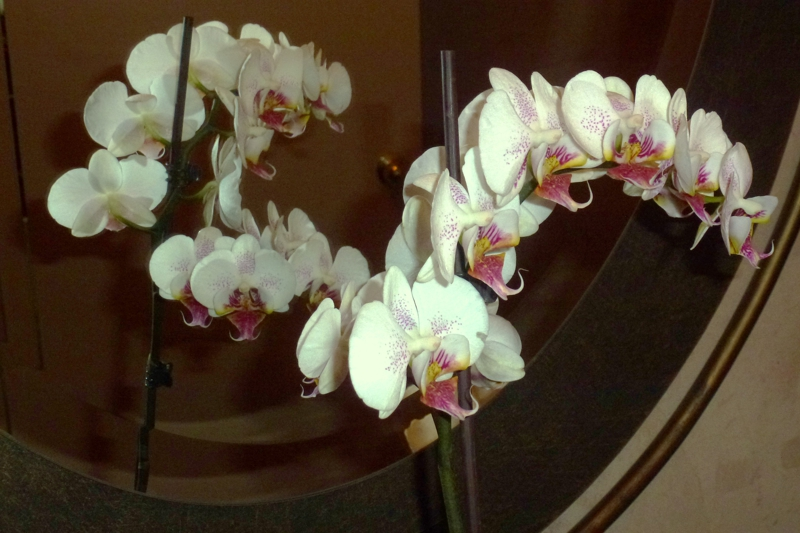 HomeRome orchids