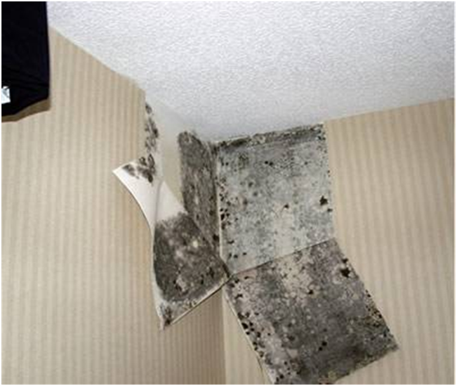 Infrared Home Inspections Can Often Prevent The Need For