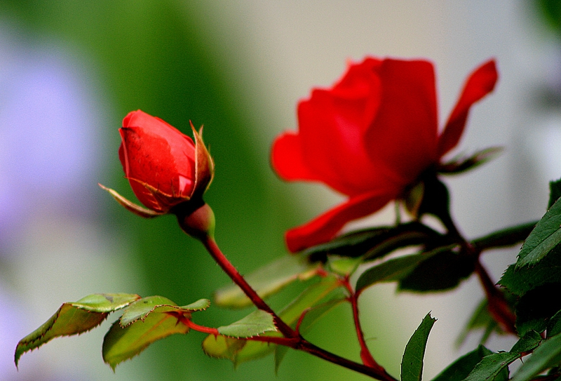 mantua homes for sale