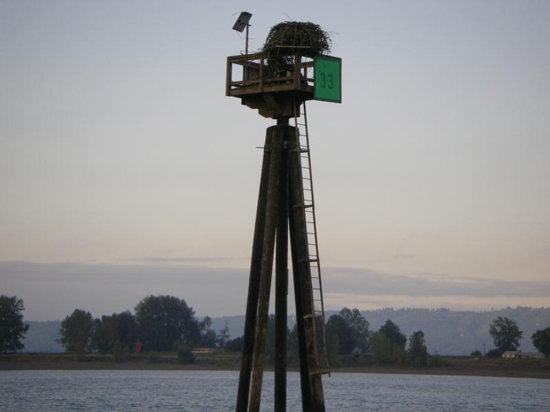 Osprey Nest on old log boom anchor post in the Columbia River at Vancouver, WA
