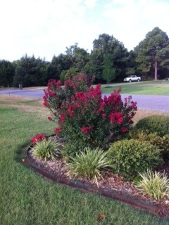 CREPE MYRTLE TREE SEARCY AR
