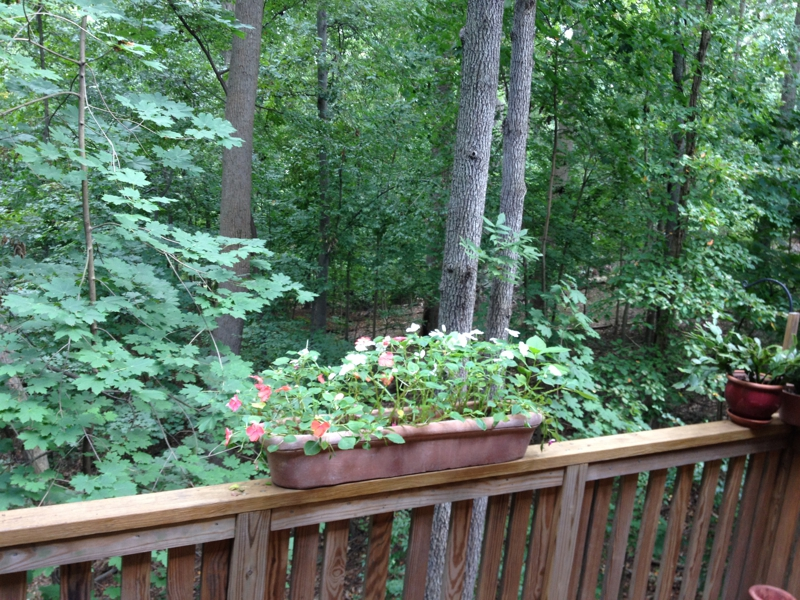 View of Rock Creek Forest from a current townhouse listing