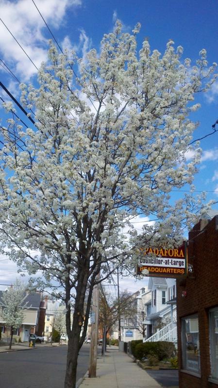 Spring in Malden MA