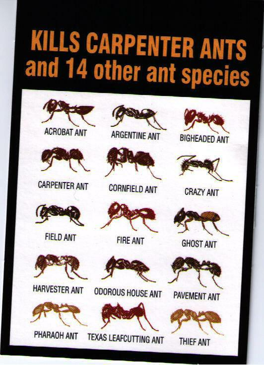 . How Many Kinds of Ants are There