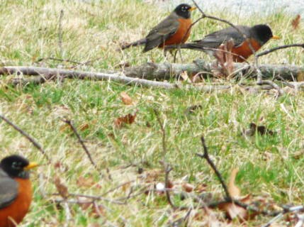 Spring Robins HomeRome 410-530-2400