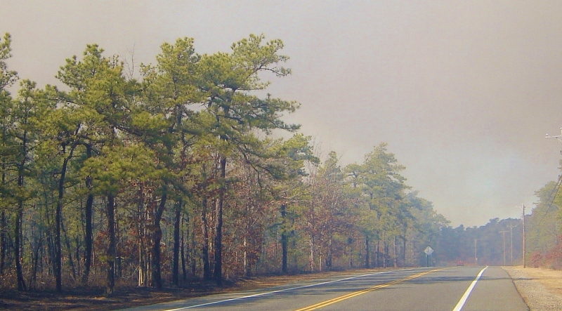 Controlled burning in the NJ Pinelands