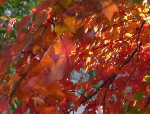 Fall colors 2010 in Baltimore HomeRome Realty