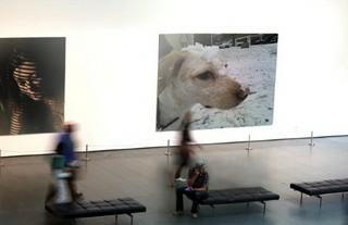 Doggie in the art gallery