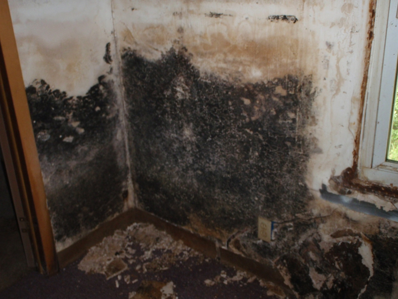 Mold in bank owned property