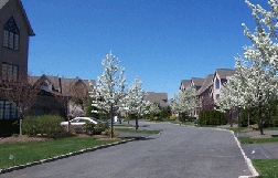 Park Ridge Street