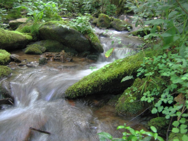 Ben Creek in the Nantahala Forest