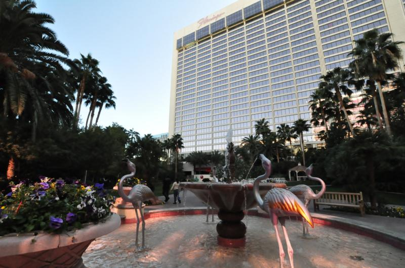 must see video of flamingos getting ready for a busy day in las vegas nevada by vegas bob 2 14 2010. Black Bedroom Furniture Sets. Home Design Ideas