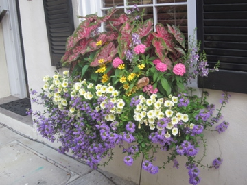 No Plastic Or Artificial Flowers You Won T Be Able To P These Off As Real Mother Nature Doesn Let Her Get Dirty And Dusty
